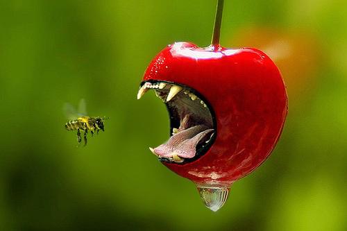 Killer cherry attacks